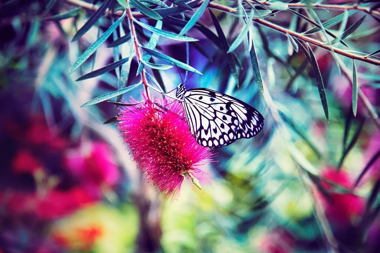 Quand les papillons se sont envolés…